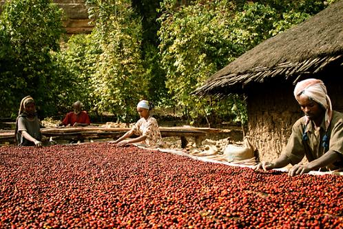Ethiopia Guji Gorgora