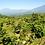 Thumbnail: Guatemala La Libertad SWP Decaf