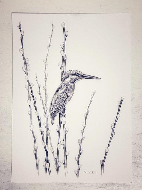 Kunstdruck DinA4 'Eisvogel' - Atelier Vaya