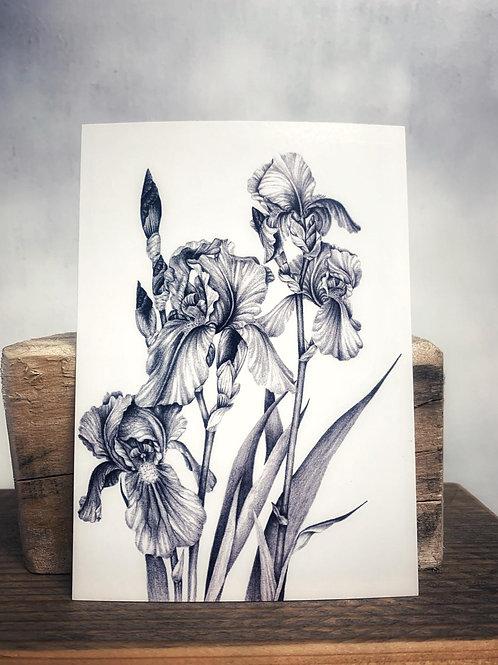 Postkarte 'Schwertlilie' - Atelier Vaya