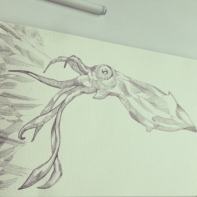 Facebook - Inkling #drawing #penandink #inkonpaper #illustration #sketch #squid #seacreature #calama