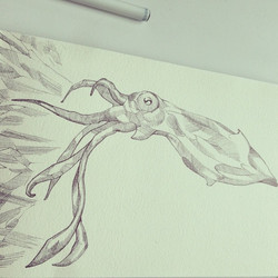 Facebook - Inkling #drawing #penandink #inkonpaper #illustration #sketch #squid #seacreature #calama