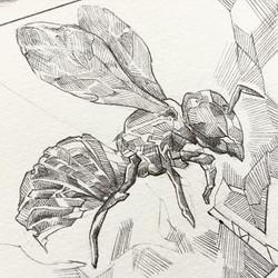 Facebook - Killa beez #bee #sketch #inkonpaper #drawing #illustration #killabeez #wutang #creamgetth