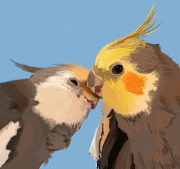 Birdy Buddies