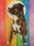 dog, boxer, rainbow dog