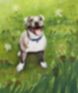 dog outside, pitbull outside, outdoors, in grass