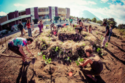 community permaculture gardens
