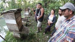 curso de permacultura - apicultura