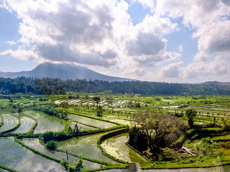 Rice Paddy Maze, Bali