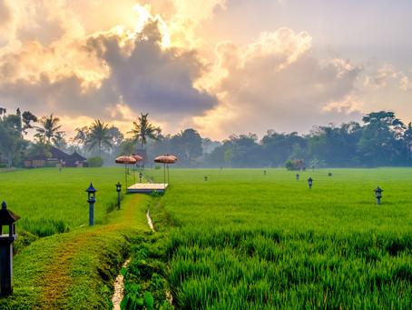 The Rice Paddy Field, Chedi Club, Bali