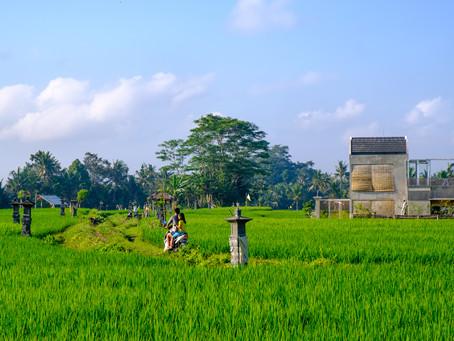Ride in the Paddy Fields, Chedi Club, Bali