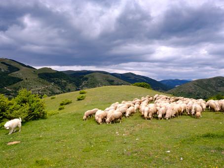 Truffle Hunting, Umbria