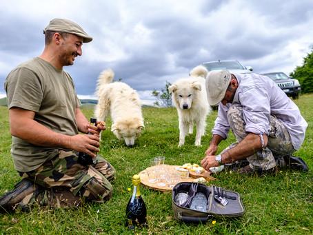 Truffle Hunting II, Umbria