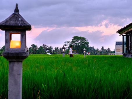 Rice Paddy at Dusk, Bali