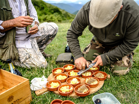 Truffle Hunting IV, Umbria