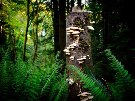 Fungi Pillar