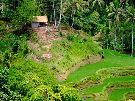 Above the Rice Paddy, Bali