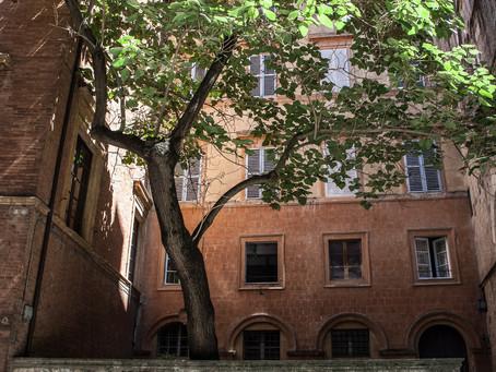 Urban Tree in Siena