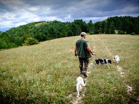 Truffle Hunting III, Umbria