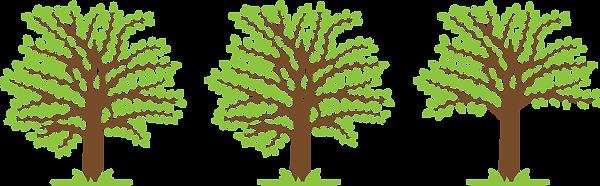 Crown Lifting - Tree Work