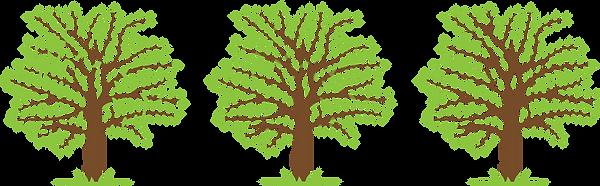 Crown Thinning - Tree Work
