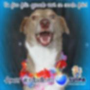 dogsuipa.jpg