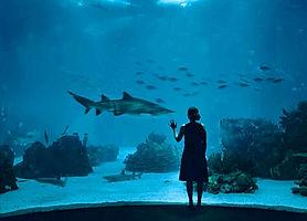 lisbon-oceanarium-shark.jpg