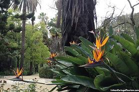 botanical-garden-lisbon.jpg