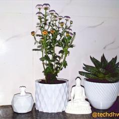 Customized Pots