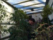 PLANTS LR.jpg
