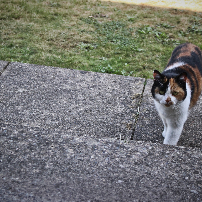 Cat - Afordable Services