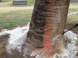Remoción ecológica de rayados en árboles...