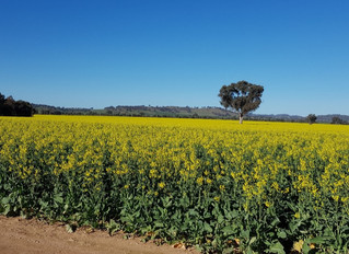 CAN YOU BUILD SOIL CARBON IN A DROUGHT? - ASM MID-TERM UPDATE