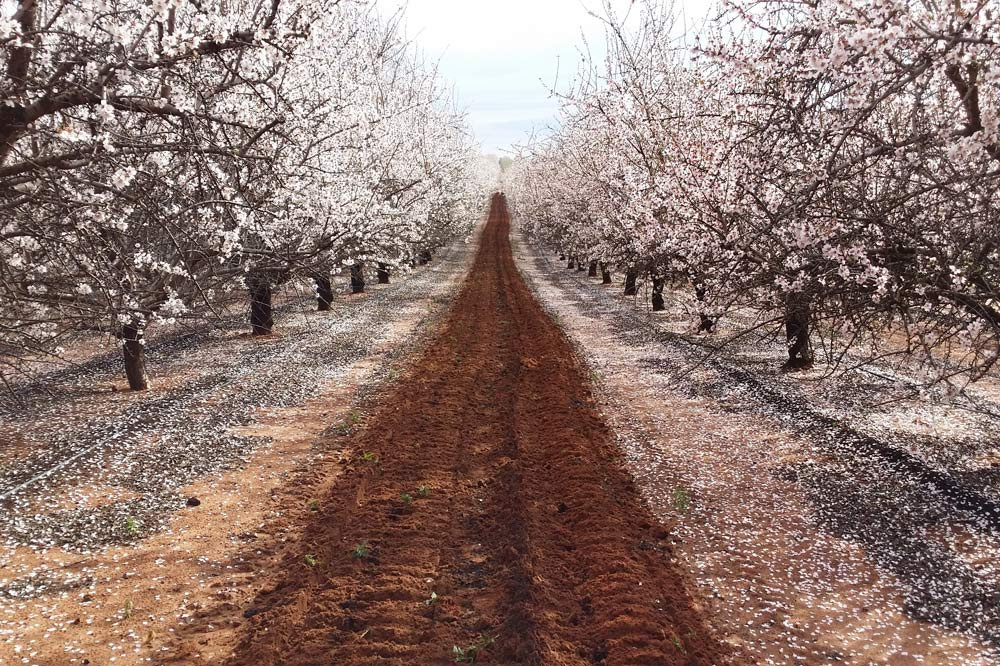 Select Harvest Almonds