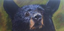 Young Bear, looking at you