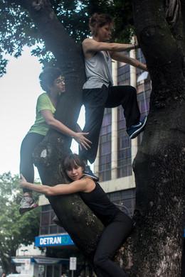 subidas em árvores -- Nina Harper
