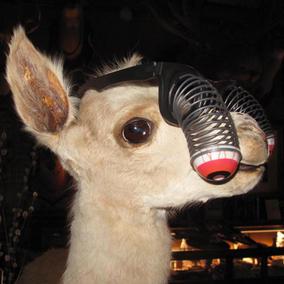 llama for web.JPG