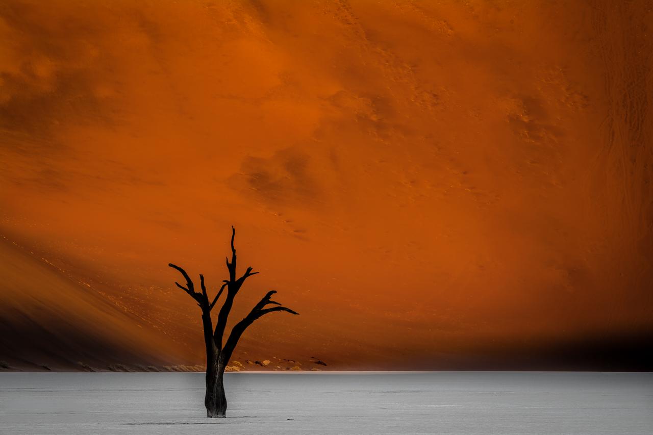 A Tree in Mars - Uma Árvore em Marte