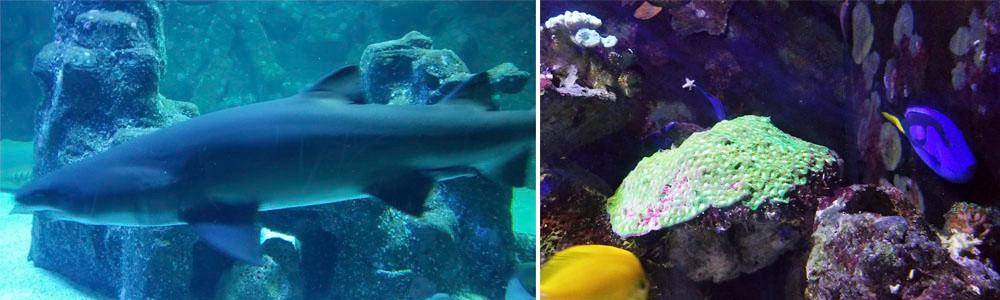 tubarão e nemo aquario de são paulo