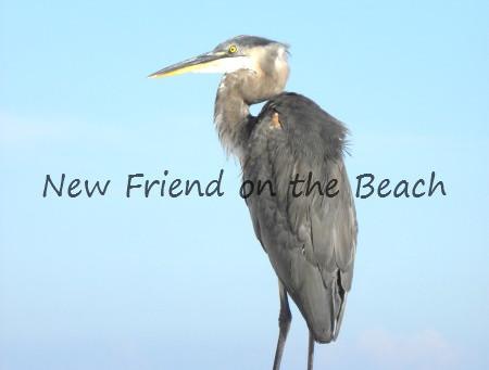 New Friend on the Beach