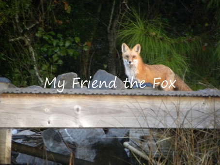 The Fox of Bayou Texar