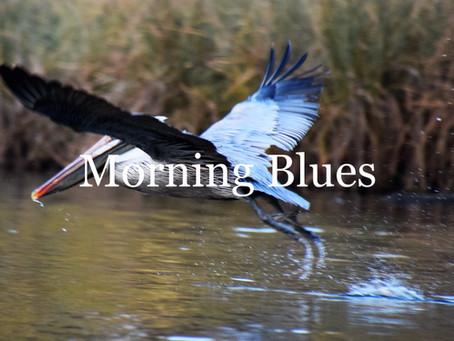 More Blue Birds