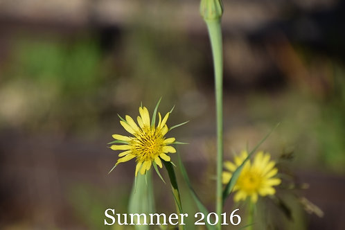 Flowers of Summer 2016.2