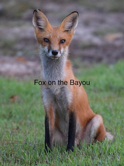 Fox on the Bayou