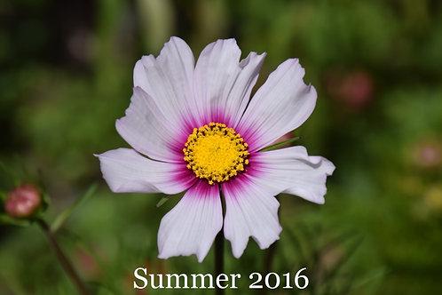 Flowers of Summer 2016.1