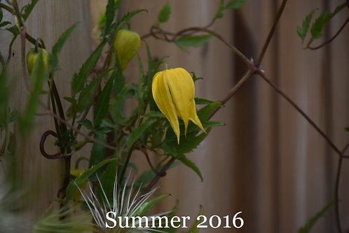 Flowers of Summer 2016.3