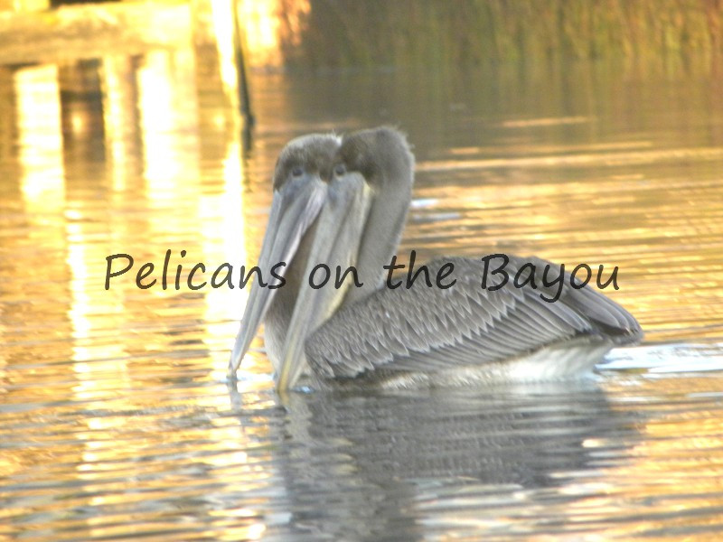 Pensacola bayou Photos Nature