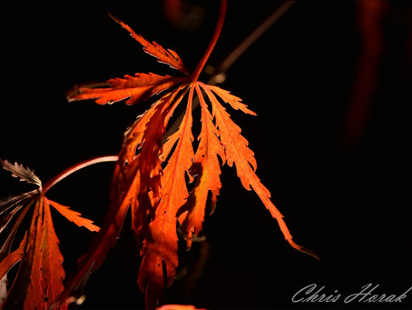 Fall Color Drama