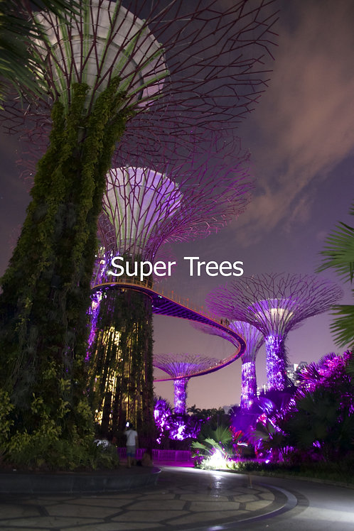 Super Trees of Singapore
