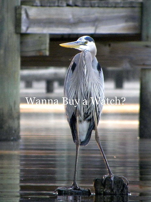 Blue Heron Series